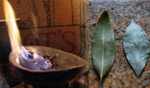 Волшебная сила лаврового листа