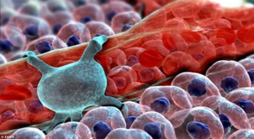 Немного про вирусы и бактерии