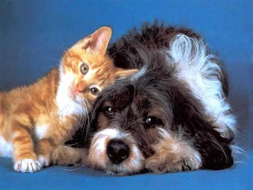 Животные  наши домашние лекари
