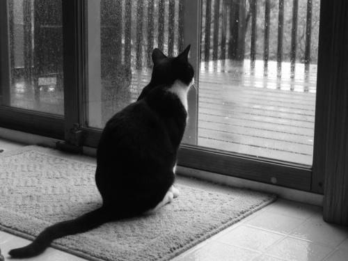 Записки гадалки кот который смотрел вдаль