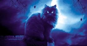 Коты и кошки из потустороннего мира
