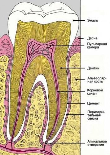Михаил Столбов  Как я вырастил новые зубы Глава 7