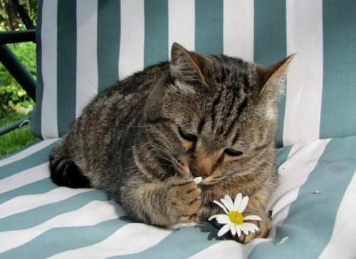 Рассказ кошачьей хозяйки