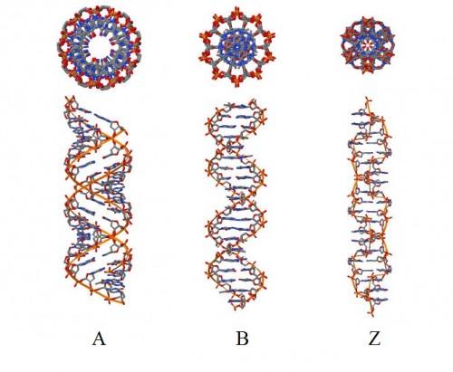 Геном меняется