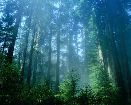 Сила леса